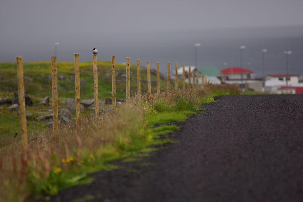 Iceland-2013-38.jpg