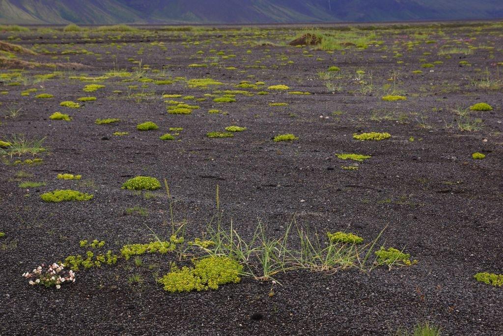 Iceland-2013-50.jpg