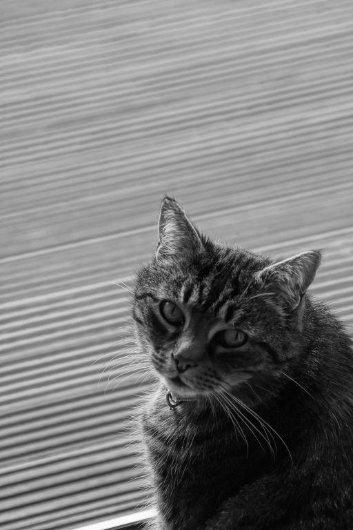 cats-05.jpg