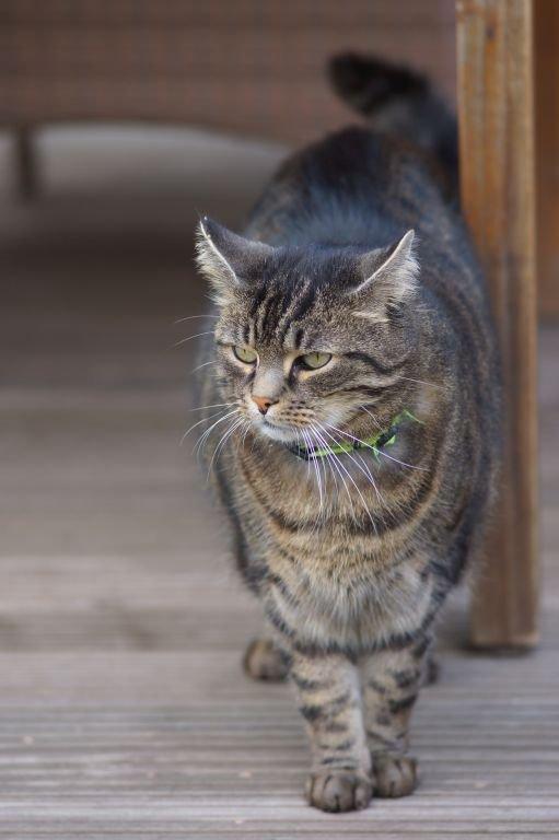 cats-11.jpg
