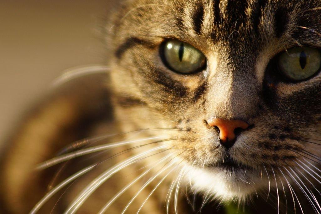 Die meisten Katzen sehen aus...