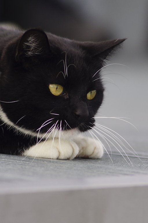 Zingst-Katze