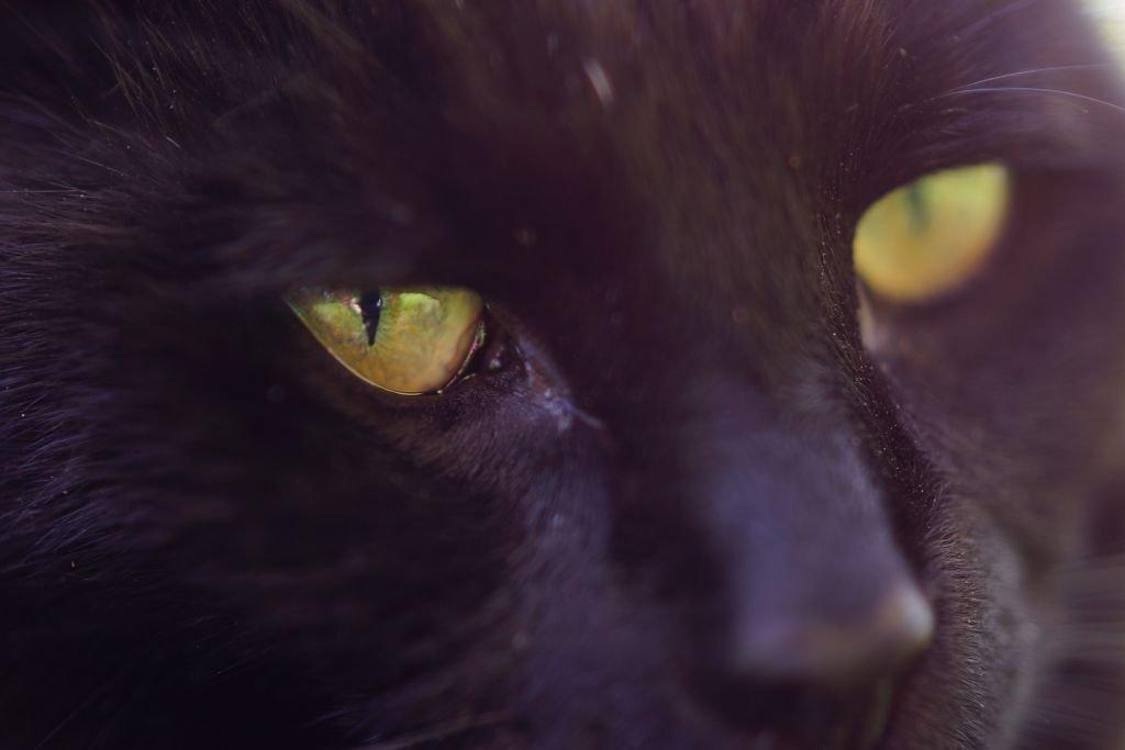 cats-02.jpg