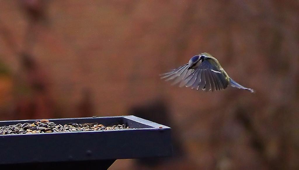 birds-22.jpg