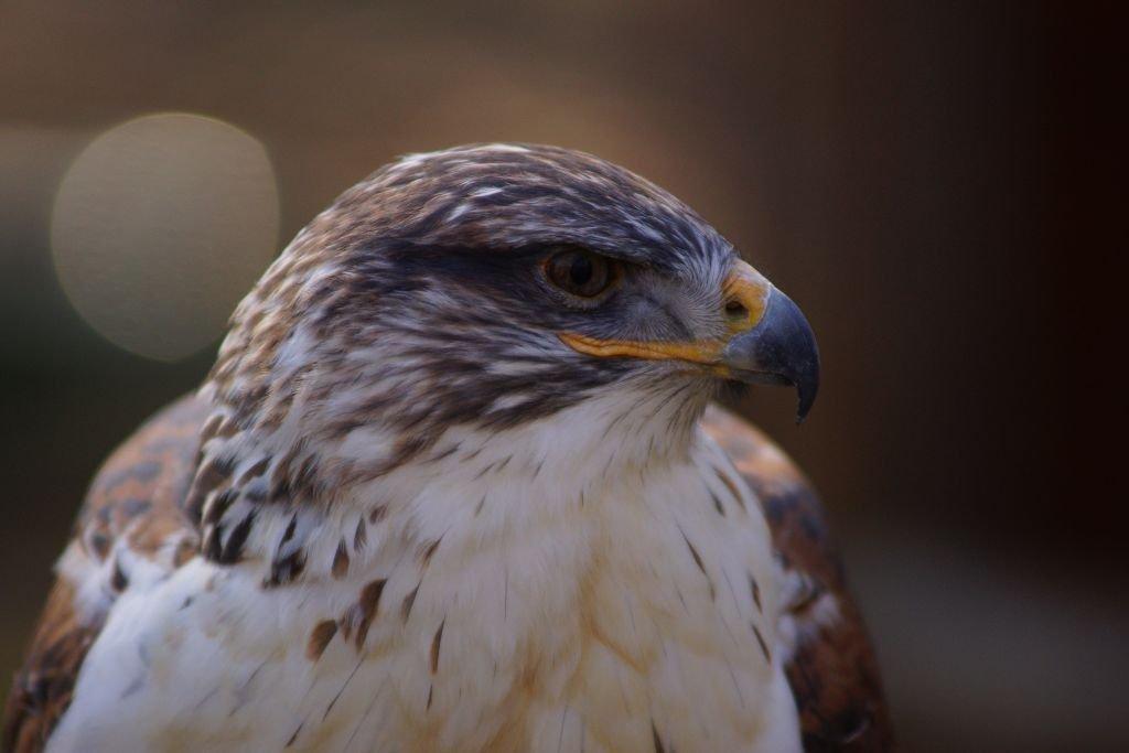 birds-23.jpg