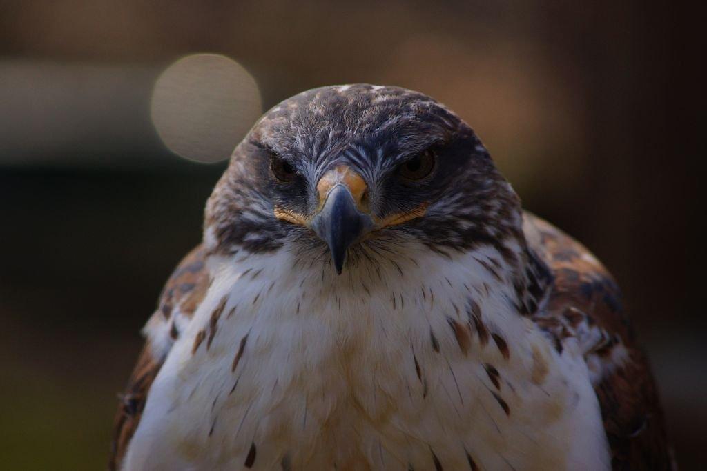 birds-24.jpg