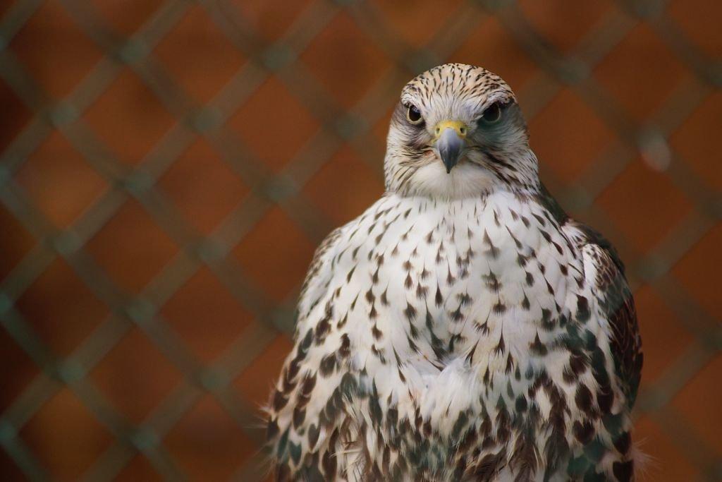 birds-26.jpg