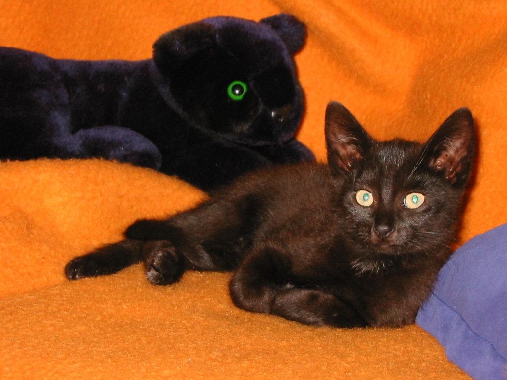 2-schwarze-Panther.jpg