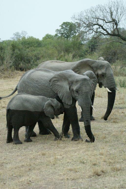 Unsere erste Begegnung mit Elefanten