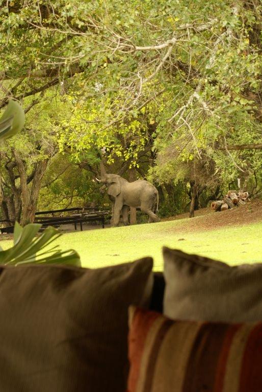Die Elefanten stehen vor unserem Zimmer