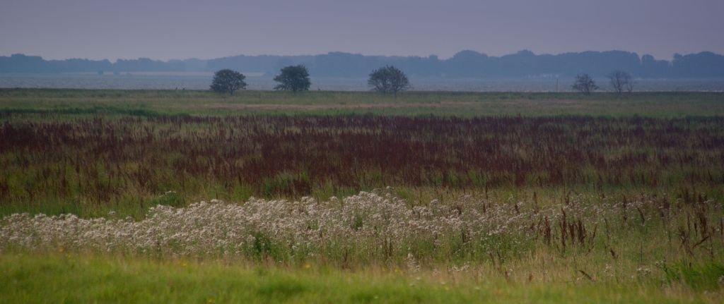 Felder in Zingst