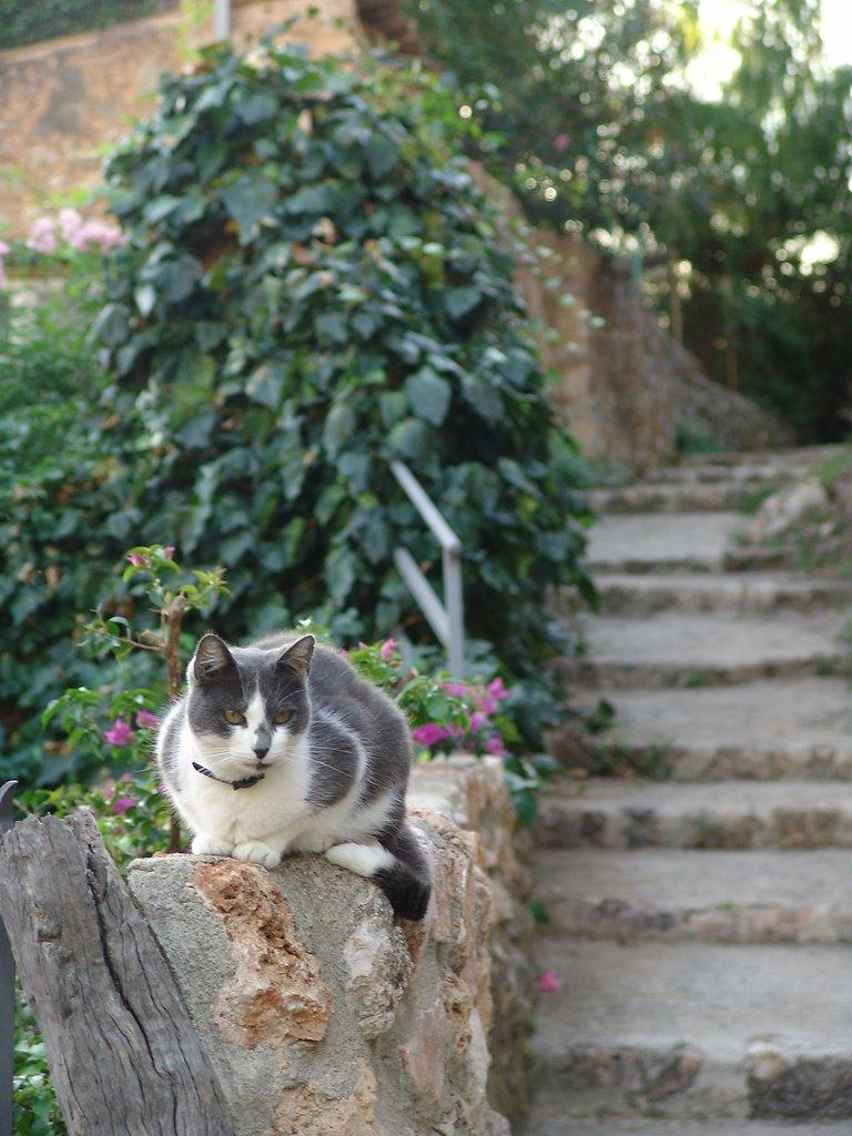 Katze-auf-Malle.jpg