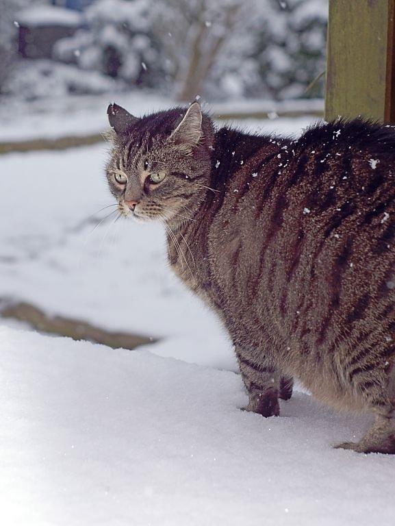 Yoshi-im-Schnee.jpg
